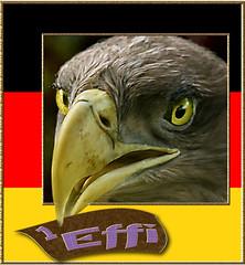 eagle1effi