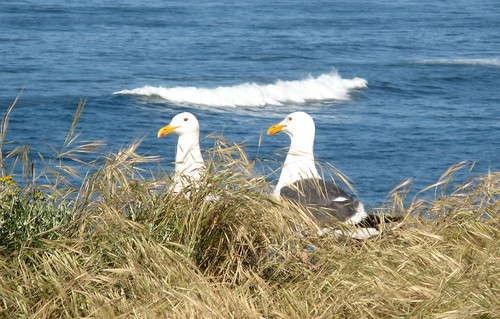 Gulls in repose