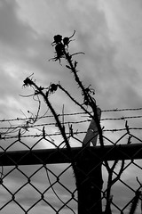 THE ESCAPE (Jeffersonsky) Tags: sky rose clouds fence post barbedwire