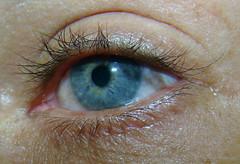 Olho (Rodrigo Soldon 2) Tags: blue macro verde eye azul de geotagged ojo photography photo foto photographie blu bleu olho blau fotografia makro  auge occhio oculus oog il  macrofotografia     macrophotographie photography  makrofotografie   stock lhikuvaus makrokuvaus banco imagens
