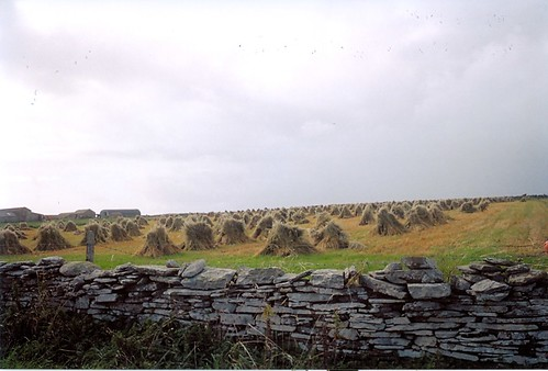 Cornstooks on North Ronaldsay