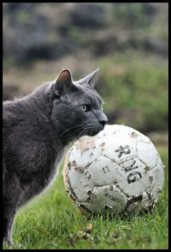 Klói and the football