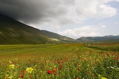Pian Grande (Patrizia MS) Tags: nuvole fiore papaveri prospettiva castelluccio fioritura profondità piangrande