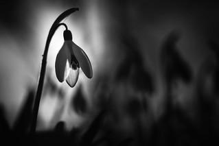 Black and White - HMM (#explore 21-2-2017)