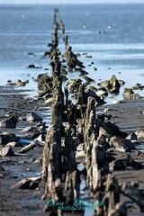 Norddeich-Ostfriesland (Gina Biernath) Tags: ostfriesland norddeich niedersachsen lawer saxony wasser water buhne nordsee northsea seacapes landscape