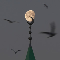 Moonchild (zsnajorrah) Tags: urban minimal abstract animals birds birdsinflight motion mosque minaret architecture sky moon earlymorning 7dmarkii ef70200mmf4lis netherlands hoofddorp arrahmanmosque moskeearrahman arrahman