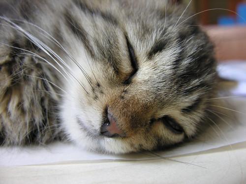 De ha alszik, nagyon cuki