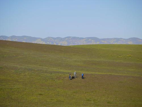 a grassland set