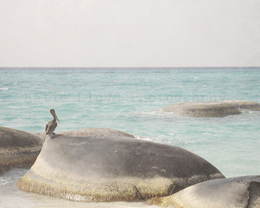 Beach-vintage-pelican---8x1