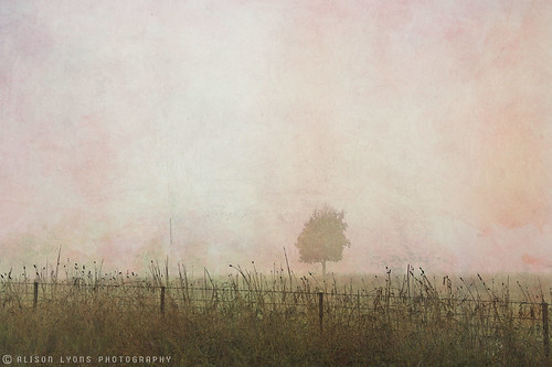 A haze of pink fog by alison lyons photography