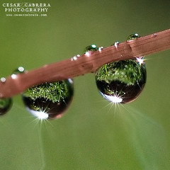 Twins! (Cesar R.) Tags: plant macro reflection nature water rain drops lluvia agua bravo drop nikond50 explore micro reflejo refraction 60mm gota nikkor naturesfinest eow seachthebest superaplus aplusphoto goldenphotographer superhearts platinumheartaward omgdamnawesome