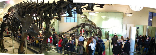 Panorama - Fossil Hall