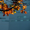 (fusion-of-horizons) Tags: autumn fall architecture campus de photography photo university fotografie photos cincinnati architect thom uc mayne morphosis thommayne arhitectura arhitect arhitectură universityofcincinnatirecreationcenter
