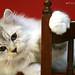ネコ:G8641