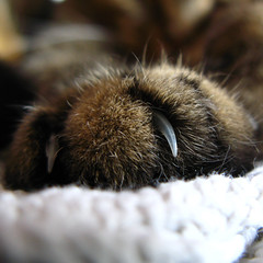 I knead you (kevin dooley) Tags: favorite hairy pet brown macro beautiful closeup tom cat wow ouch fur interesting fantastic paw furry feline flickr pretty dof hand very bokeh good gorgeous awesome tabby nail pussy award happiness superior super best sharp explore most rufus claw talon winner stunning excellent purr meow much manicure pedicure hook scratch incredible fufu breathtaking booboo boobie exciting mouser catscratchfever contentment mitt knead moggy appendage phenomenal pussiecat puddie aplusphoto rufinator mrwainwright mrclick puddiecat
