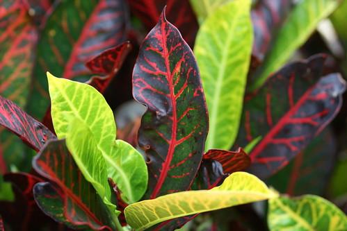 Multicoloured Bush