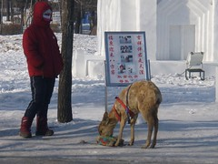 P1260078.jpg ([Terence]) Tags: china travel cold heilongjiang freezing tigers russians icefestival snowfestival harbin haerbin winniechan carlfoo