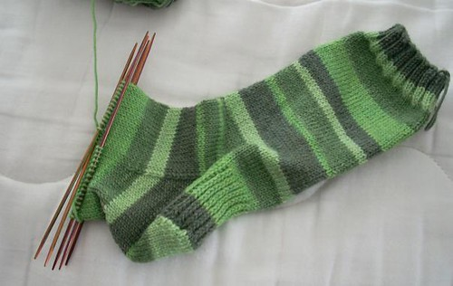 Arugula sock as of 3/1