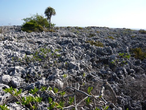 Typical Cayman Brac bluff terrain