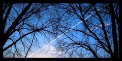 through it all.. (~no bullshit~) Tags: blue trees sky landscape explore jetstream experimentation iloveit highinthesky singintheblues lifeasiseeit imagepoetry fineartphotos golddragon the4elements platinumphoto anawesomeshot diamondclassphotographer flickrdiamond ishflickr goldsealofquality zenenlightenment theperfectphotographer skiescloudsandsun top25blue top2025blueshalloffame digifotopro fanflickrtastic rubyphotographer