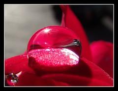 La joya acutica!! (hiskinho) Tags: sun plant detalle detail macro planta sol window water car rain ventana soleil lluvia agua waterdrop flor drop coche reflejo gota theunforgettablepictures