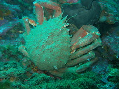 p1010006rm0 (coismarbella) Tags: marbella crustaceos