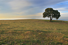 ... (Eternament) Tags: tree field arbol oak bravo meadow 100v10f catalonia catalunya prado albero arbre catalua catalogna prat encina catalogne alzina abigfave favemegroup4