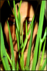 Day 118/365 Hiding Out... (~lala~(Lisa)) Tags: selfportrait me self myself again tired 365 longday hidingout 365days i project3662008 ~lala~ onthegoalldaylong latenightforphototaking