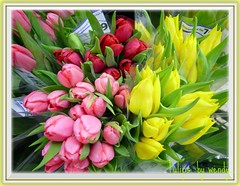 More tulips........... (pinklady6... Home ..) Tags: pink red floral yellow searchthebest tulips picnik blueribbonwinner mywinners bunchesofflowers specialshotswelltaken