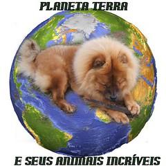 PLANETA TERRA E SEUS ANIMAIS INCRÍVEIS