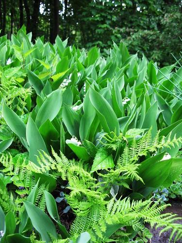 Lilys, Ferns, Rhythm
