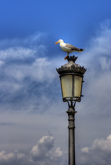 La gavina (Salva Mira) Tags: farola cel cielo nubes gaviota benidorm nvols gavina fanal marinabaixa salvamira