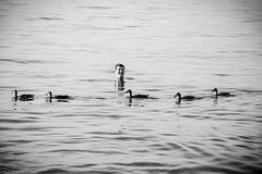 Lago di garda (Morena •AN• Massacesi) Tags: lagodigarda gardaland garda lago