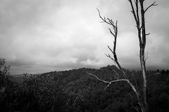 Rami secchi, Sila piccola (an.thoniee) Tags: sila catanzaro calabria rami secco bosco monocromo biancoenero natura cielo nuvole branches drytree wood nature monocrome blackandwhite sky clouds