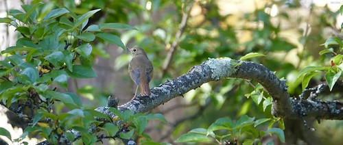 """Birding • <a style=""""font-size:0.8em;"""" href=""""http://www.flickr.com/photos/52364684@N03/32222817693/"""" target=""""_blank"""">View on Flickr</a>"""