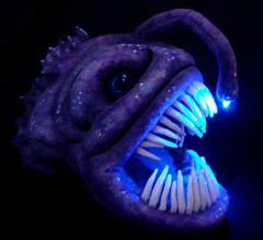Angler Fish 5