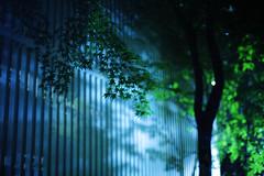 2129/1804*-' (june1777) Tags: light tree home night canon t eos 50mm apartment snap e 5d nikkor 3200 f12 blueribbonwinner 50mmf12ai