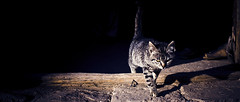 into the light (Luis Montemayor) Tags: cat sunrise mexico amanecer doorway gato myfavs realdecatorce 235 sanluispotosi dflickr dflickr180307