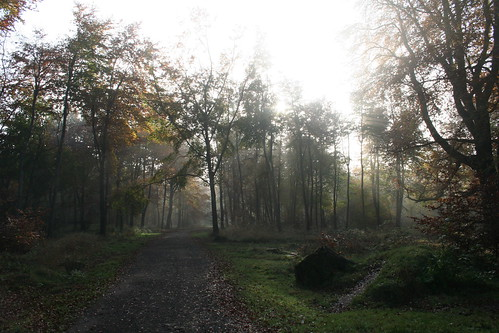 Savernake Forest 05