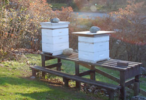 Two bee boxes complete with colonies at the UBC Botanical Gardens.