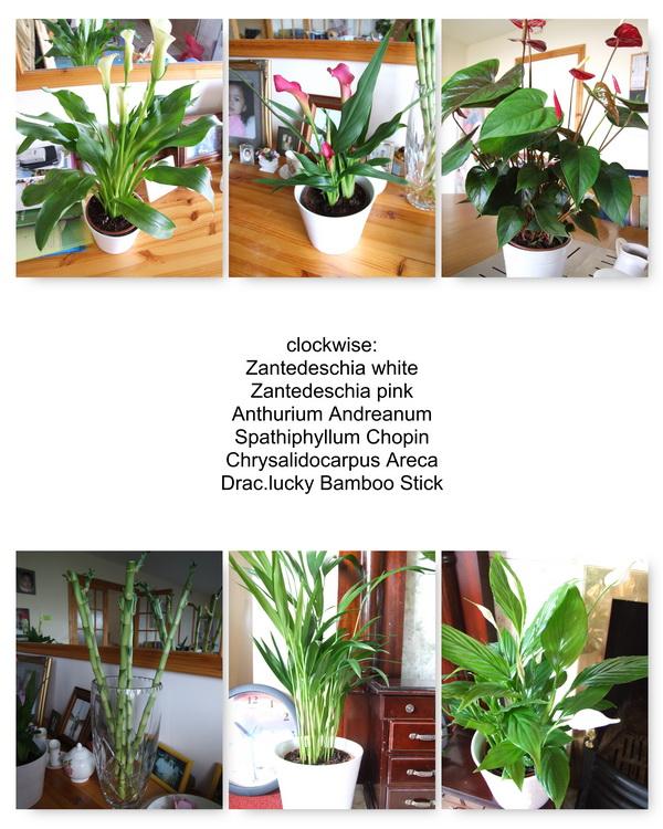 plant1600