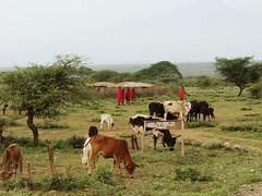 reportage sui Maasai (flavio.marinoni) Tags: africa gente kenya ken safari nero masai guerriero savana etnia anomali