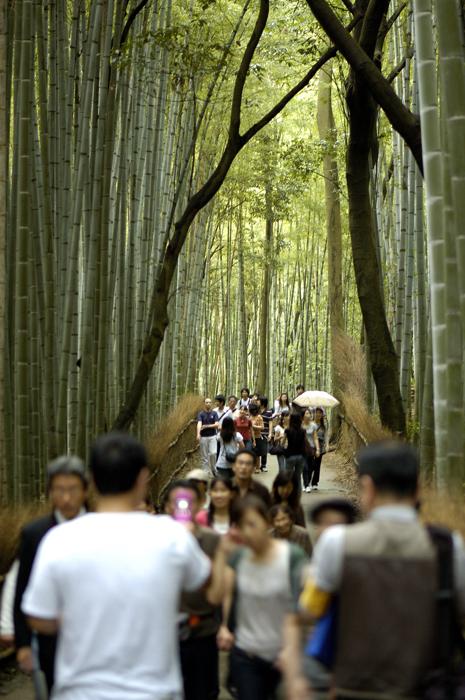 嵐山から嵯峨野あたりを散策してみましょう