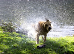 Fast dry.... (Tess_) Tags: dog green water tag3 taggedout tag2 tag1