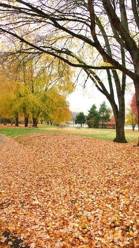 7樹葉編織的地毯