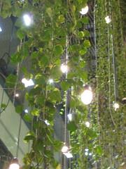 Funf Hofe Hanging Plants