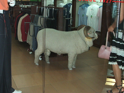 18 anatomically correct sheep  in a clothes shop  we tried to buy this once