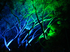 Altamira's Christmas Trees (J. Frahm) Tags: christmas trees arbol navidad venezuela caracas altamira anawesomeshot colourartaward artlegacy