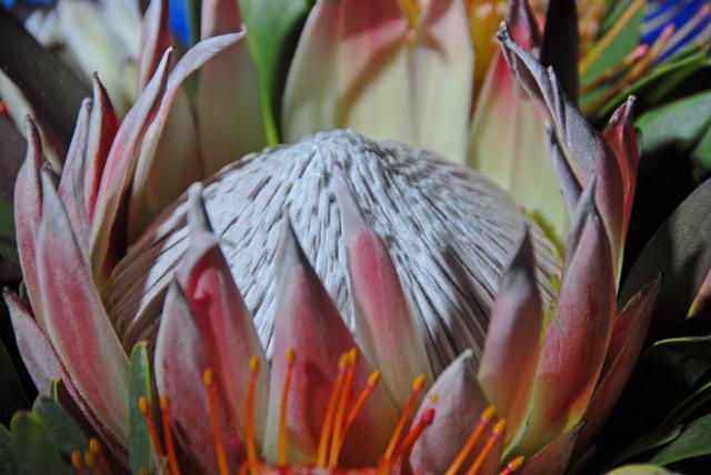 Protea basket 06b