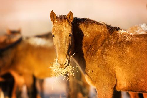 Feeding Horses 139